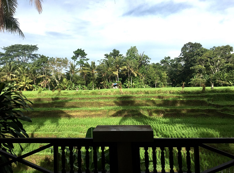 ubud rice terrace